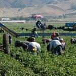 Trabajadores agricolas serán elegibles para horas extras.